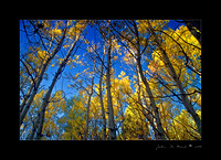 An Aspen Morning