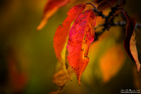 The Color Of Fall Fire