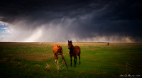 Horses In The Storm