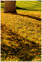 The Fall Leaves of Littleton.jpg