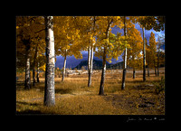 Autumn in Alluvial Fan