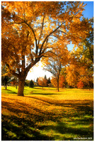 Littleton Park in Autumn.jpg