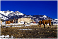 The Horses of Como Colorado