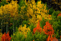 The Painted Forest Of Colorado